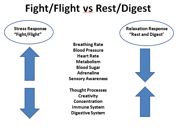 Graphpic showing fight or flight response traits